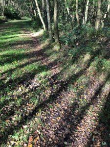 farley woods